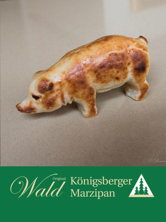 Großes Original Wald Königsberger Glücksschwein geflämmt